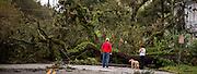 damage left by Hurricane Matthew as it made its way up the East Coast, Saturday, Oct. 8, 2016, in Savannah, Ga. (AP Photo/Stephen B. Morton)
