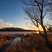 The golden light of the setting sun shines on the cattails and reeds that line the frozen McGinnis Slough in the Orland Grove Forest in Orland Park, Illinois.