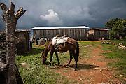 El CALVARIO, MEXICO - AUGUST 4, 2015: A horse outside of the house of Jose Luis Garcia relatives in the community of El Calvario, México.  Rodrigo Cruz for The New York Times