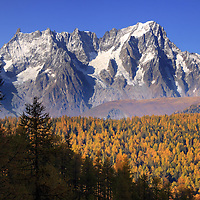 A view of the majestic northeastern portion of the Monte Bianco/Mont Blanc - from Dente del Gigante/Dent du Geant to Les Grandes Jorasses, with the first snow of the seasons and some beautiful fall colours on the larches of the Tete d'Arpy forest. Stitched from four verticals
