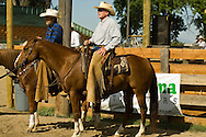 Tom McGuane, author, competes in cutting horse competition, Big Timber Montana, Quarter Horse, Hard Hat Harry