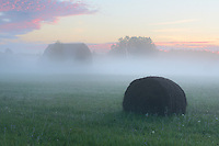 A fog-covered field near Glennie, Michigan