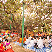 Buddhist pilgrims chant and meditate below the Bodhi Tree, the descendent of the tree where the Buddha attained enlightenment, at the Mahabodhi Temple in Bodhgaya India.