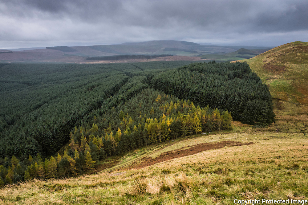 Camptown, Jedburgh, Scottish Borders, UK. 27th October 2016.  Looking south weat from Phillip Law (422m) at autumn colours on the outskirts of Leithope Forest. The Carter Bar border crossing on the Anglo Scot Border is on the skyline. The area is famous for the Raid of Redeswire, a skirmish between the English and Scots in 1575. © Chris Strickland / Alamy Live News