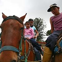 Caballos en el Junquito. 31-08-2008 (ivan gonzalez)