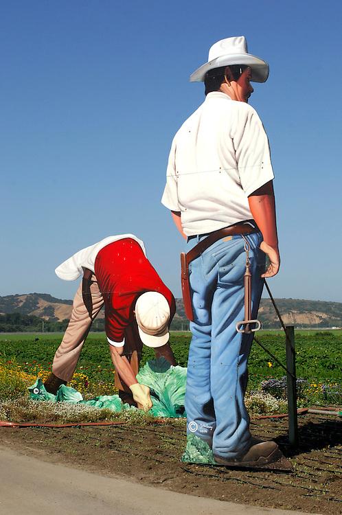 Vegetable fields, Harvest, Salinas, California, United States of America