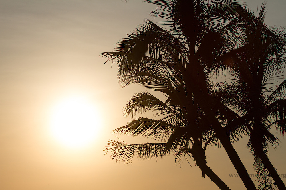 Palm trees in misty sunset Cost Rica