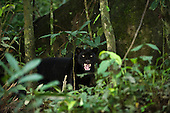 Ecuador Amazon Rain Forest/Yasuni