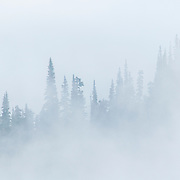 Trees on the summit ridge of Lost Cabin Mountain vanish into the fog in Olympic National Park, Washington.