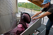 Harvest at Penner-Ash Winery, Willamette Valley, Oregon
