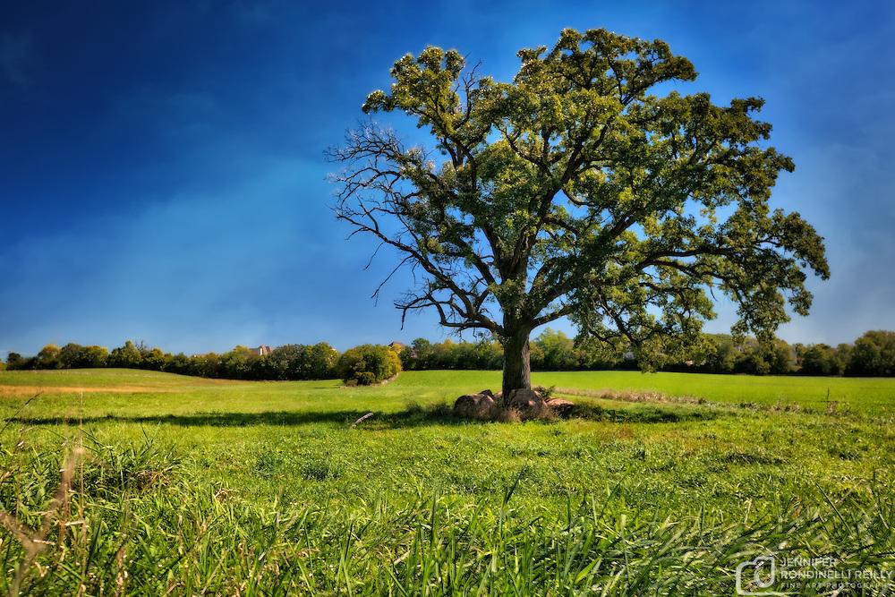 Lone Oak tree near Retzer Nature Center.