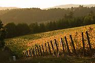 Oregon - Patton Valley Vineyards