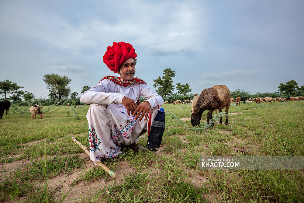 Raika or Rayka Tribe travel long distances with their  livestock from Rajasthan or Gujarat to distant areas of Central India.
