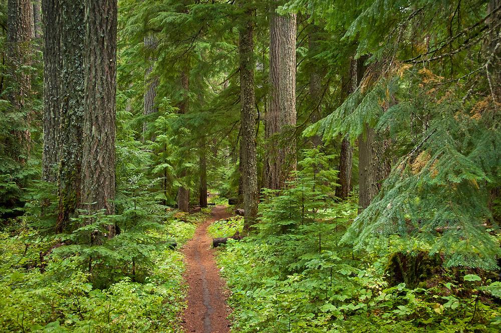 McKenzie River National Recreation Trail near Clear Lake, Willamette National Forest, Oregon.
