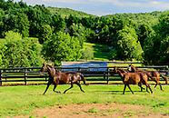 Allerage Horse Farm, Standfordville, NY