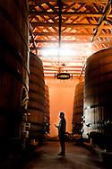 EL ENOLOGO CHILENO MARCIO RAMIREZ (CABERNET, MERLOT Y CARMENERE) EN EL FUNDO PEUMO DE LA VIÑA CONCHA Y TORO. Peumo, Valle del Cachapoal, Sexta Region. 19-06-2013 (©Alvaro de la Fuente/Triple.cl)
