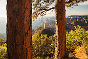 Looking through a pair of ponderosa pine trees to Mount Hayden from the North Rim of the Grand Canyon.