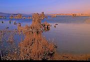 Sunset on Mono Lake's Reeds and Tufa in California's Eastern Sierra