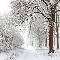 One of the many tree alleys at Stupinigi Parc, in the immediate outskirts of Turin, Italy, under a nice snowfall. Stitched from four vertical frames.