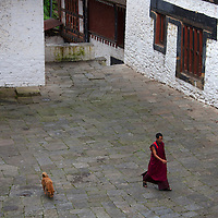 Asia, Bhutan, Trongsa. Monk and Dog at Trongsa Dzong courtyard.