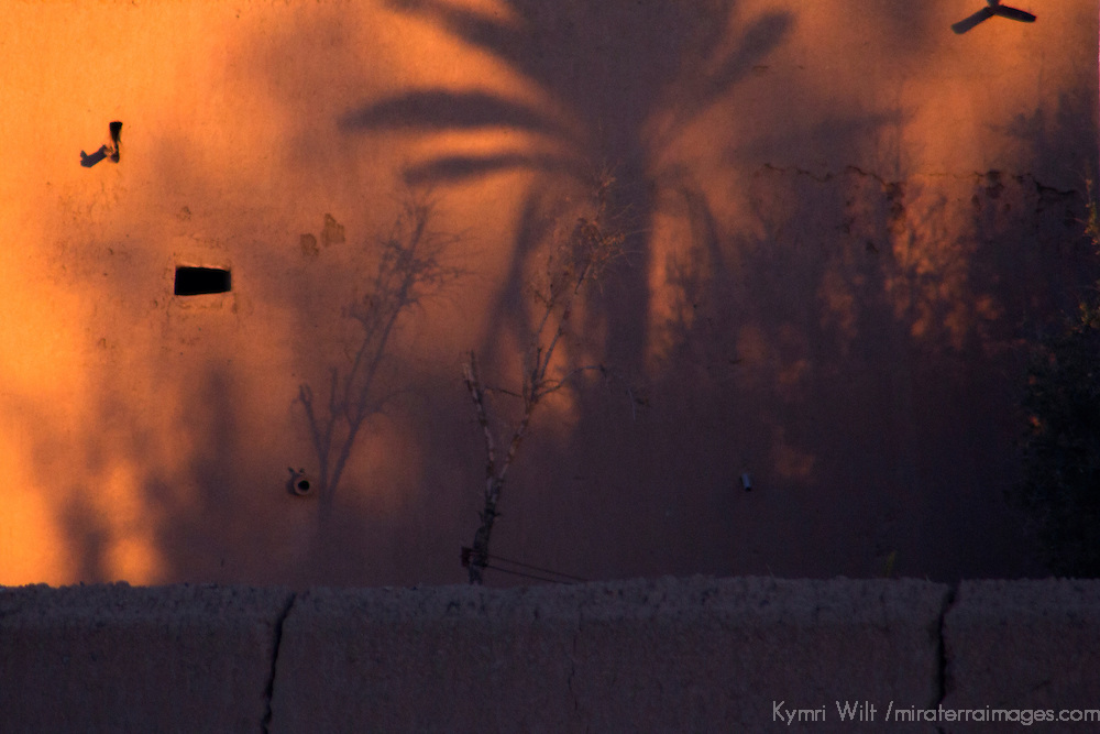 Africa, Morocco, Skoura. Shadows of palms on kasbah wall.