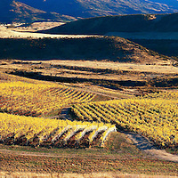 Mac Mason Vineyard on Wanaka Road, Central Otago, New Zealand