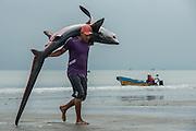 Shark Being Carried (Alopias pelagicus)<br /> Tarqui<br /> Manta<br /> Manabi Province<br /> Ecuador<br /> South America