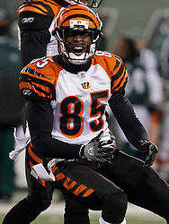 Jan 3, 2010; East Rutherford, NJ, USA; Cincinnati Bengals wide receiver Chad Ochocinco (85) reacts to dropping a pass during the first half at Giants Stadium.