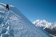 Denali National Park, AK, USA<br /> Mt. McKinley on the right, Muldrow Glacier below.<br /> Climbing Mt. Brooks, N. Ridge.<br /> Climber leads the ridge to the summit.