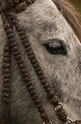 Horse &amp; knotted bridle made from bull hide<br /> Yanahurco Hacienca (Ranch) - largest privately owned Hacienda in Ecuador.<br /> Base of Cotopaxi Volcano<br /> Andes<br /> ECUADOR.  South America