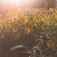 http://Duncan.co/in-the-music-garden