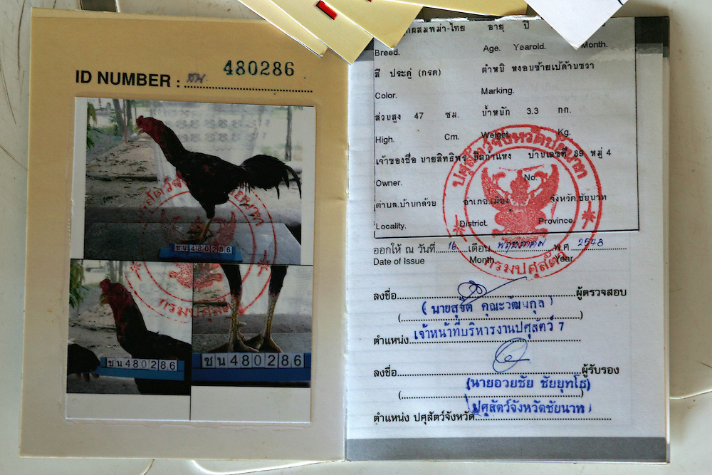 A passport for fighting cocks containing the birds photograph and certificate proving it is free of Avian Flu, Chainat, Thailand on the 15th Dec 2006.<br /> Whilst Avian Flu has been largely forgotten by the rest of the world in Thailand and Indonesia it is still an important issue. Thailand has strict control measures such as disinfection at all poultry farming sites, passports for fighting cocks and regular testing and have as a result cot AI under control. Indonesia has little control and AI is frequent, programmes put in place by the Food and Agriculture Organisation is working on the problem. Surveillance and response units go out into the communities testing birds and destroying those that display symptoms.
