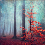 Small beech tree with autumnly red leaves. Texturized photograph.<br />