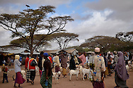Men trade goats at a market in Dadaab, Kenya. Many families interviewed by Internews said they fled to Dadaab after all of their livestock died because of the drought in Somalia. The dirt road from Garissa to Dadaab is littered with cow and goat skeletons.