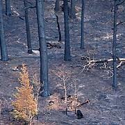 Hayman Fire, Colorado