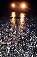 Santa Cruz long-toed salamander on road, Ambystoma macrodactylum croceum, Santa Cruz, California