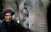 The Lao elephant