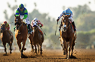 ARCADIA, CA - MARCH 11: Denman's Call #1, with Tyler Baze wins the Triple Bend Stakes at Santa Anita Park  on March 11, 2017 in Arcadia, California. (Photo by Alex Evers/Eclipse Sportswire/Getty Images)