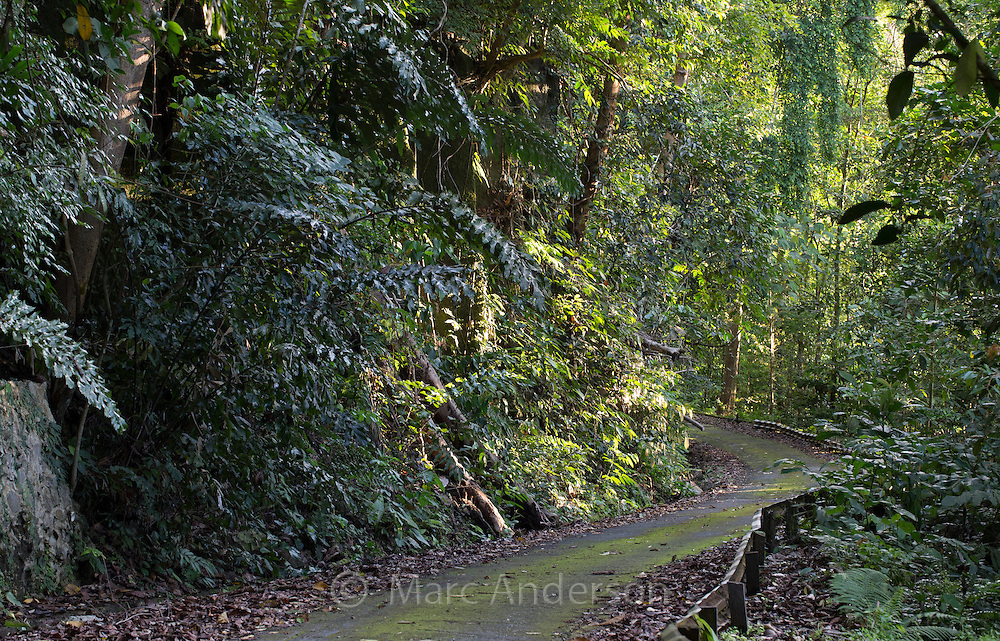 Road winding through rainforest in Kubah National Park, Sarawak, Malaysia