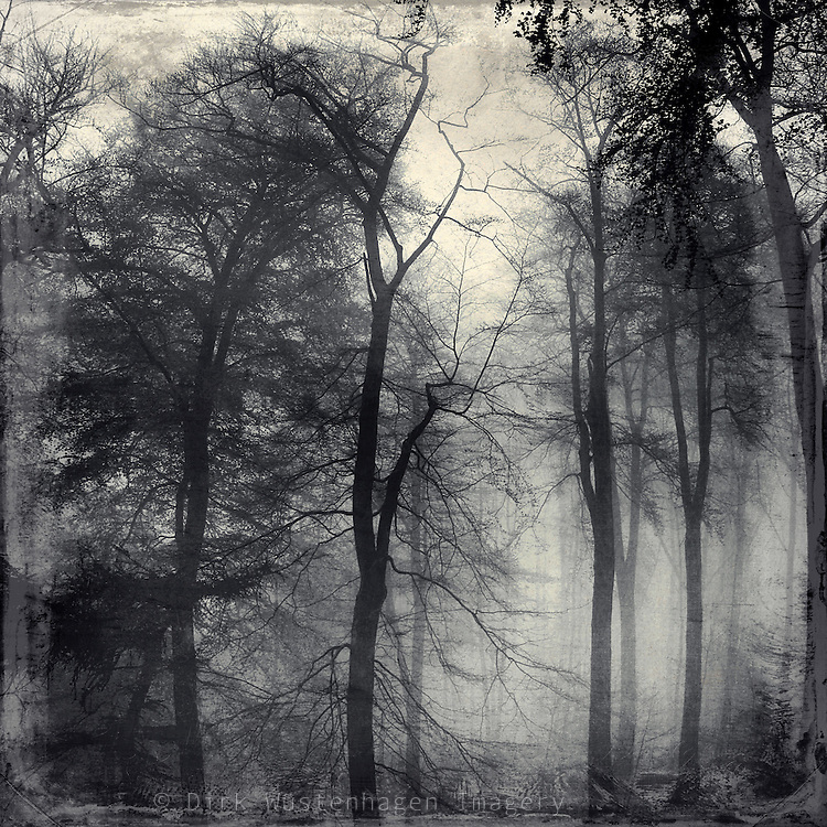 Nebel umh&uuml;llte B&auml;ume im kaiser-Wilhelm Hain, Wuppertal<br /> <br /> Trees shrouded in fog<br /> <br /> Prints &amp; more: http://society6.com/product/realm-of-shades_Print