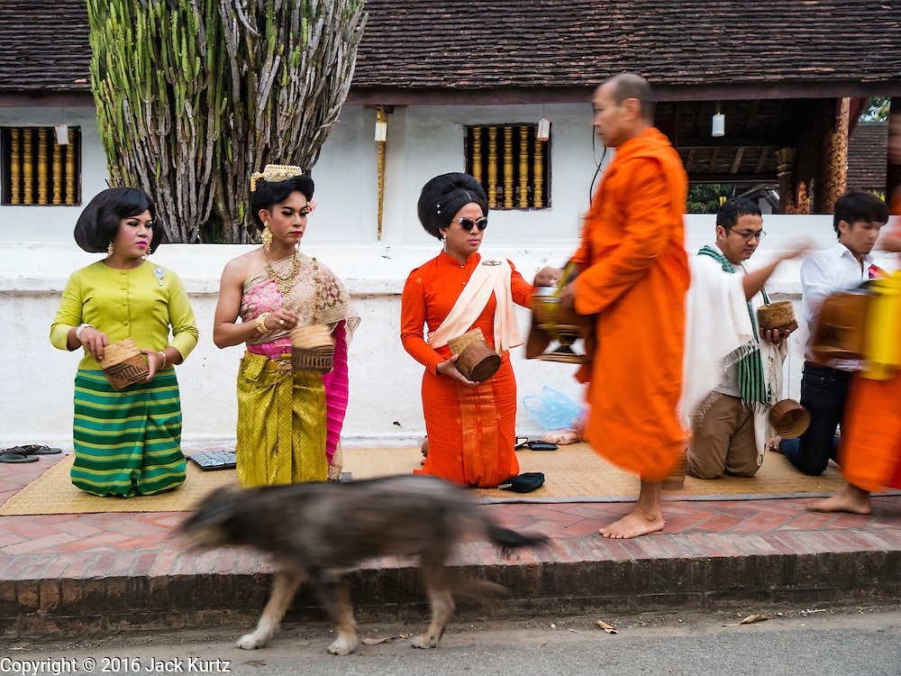 """11 MARCH 2016 - LUANG PRABANG, LAOS:  Lao women wait to present monks with alms during the tak bat in Luang Prabang. Luang Prabang was named a UNESCO World Heritage Site in 1995. The move saved the city's colonial architecture but the explosion of mass tourism has taken a toll on the city's soul. According to one recent study, a small plot of land that sold for $8,000 three years ago now goes for $120,000. Many longtime residents are selling their homes and moving to small developments around the city. The old homes are then converted to guesthouses, restaurants and spas. The city is famous for the morning """"tak bat,"""" or monks' morning alms rounds. Every morning hundreds of Buddhist monks come out before dawn and walk in a silent procession through the city accepting alms from residents. Now, most of the people presenting alms to the monks are tourists, since so many Lao people have moved outside of the city center. About 50,000 people are thought to live in the Luang Prabang area, the city received more than 530,000 tourists in 2014.      PHOTO BY JACK KURTZ"""