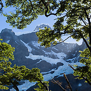 Paine Grande (about 2700 meters elevation) is framed by southern beech trees in the the French Valley (Valle Frances), Torres Del Paine National Park,Chile, South America.