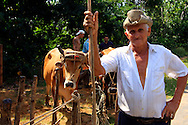 Man with oxen near Puerto Esperanza, Pinar del Rio, Cuba.