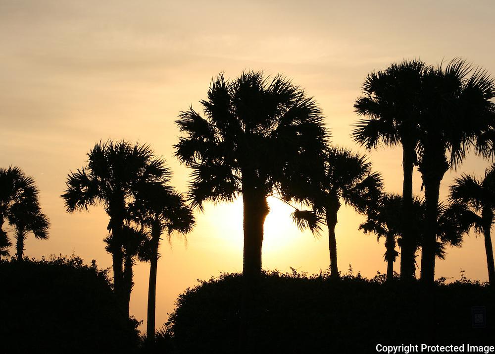 Jekyll Island palm trees silhouetted in an orange sunset, sunrise.