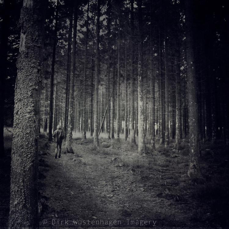 haunting fir tree forest in November rain.<br />