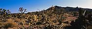 East Mojave Scenic Area, 1994