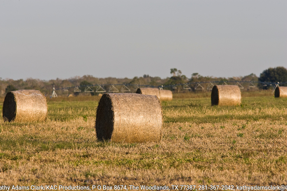 Round hay bales, Katy Prairie, West Harris County, near Houston, Texas,  tall grass prairie.