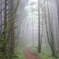 Oregon coast, Cascade Head.