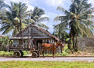 Horse and wagon by house in Moron, Ciego de Avila, Cuba.