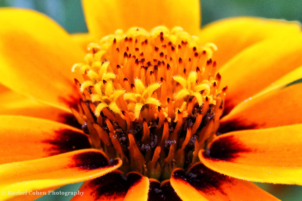 &quot;I Am&quot;<br />